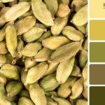 Зеленые оттенки в интерьере: гармоничный дизайн