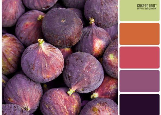 Характеристика цвета фиолетового