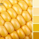 Сочетание желтого по насыщенности