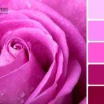 Цвет фуксии и оттенки