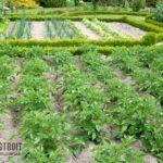 Где расположить огород на участке