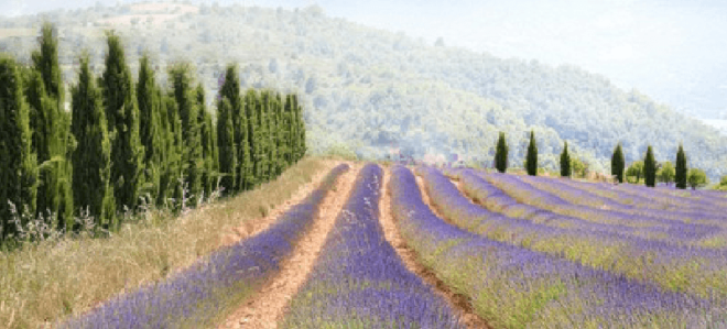 Прованс: истоки возникновения