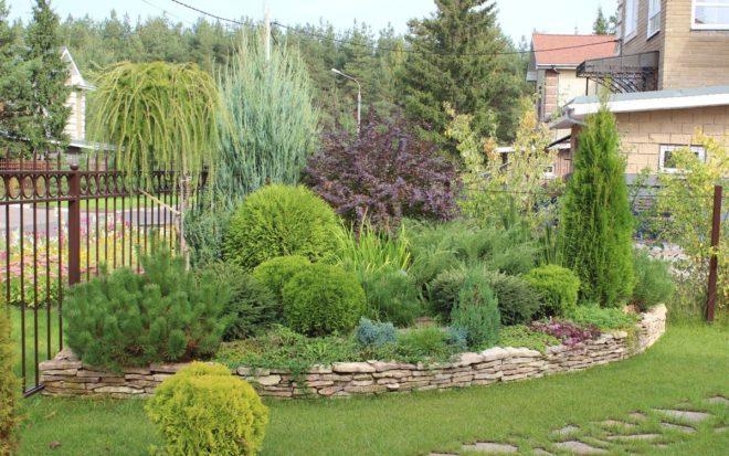 ландшафтный дизайн двора частного дома с хвойными растениями
