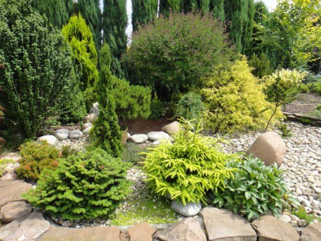 ландшафтный дизайн двора частного дома с карликовыми хвойными растениями