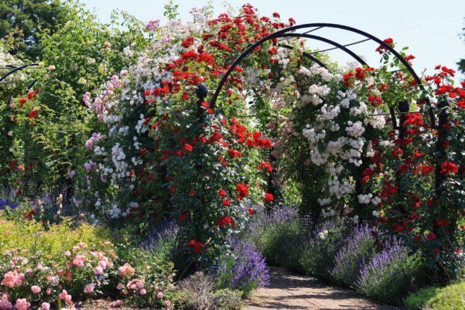 ландшафтный дизайн двора частного дома с розами и аркой