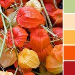 Сочетание цветов в интерьере: оранжевый и полутона
