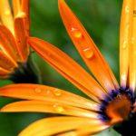 Сочетание цветов в интерьере: зеленый и все оттенки растительного