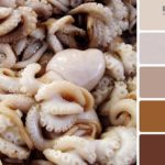Сочетание цвета в интерьере: фото удачных проектов