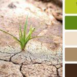 Оформление интерьера: зеленый цвет