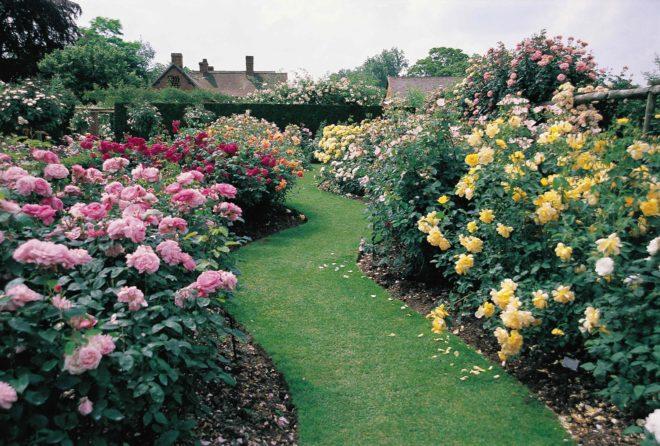 ландшафтный дизайн двора частного дома с розами