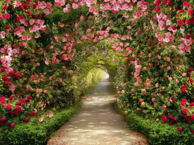 ландшафтный дизайн двора частного дома с аркой из роз
