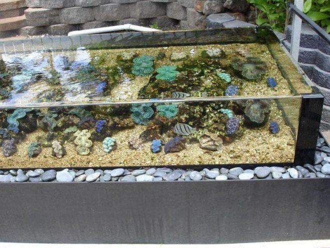 Компактный пруд из аквариума