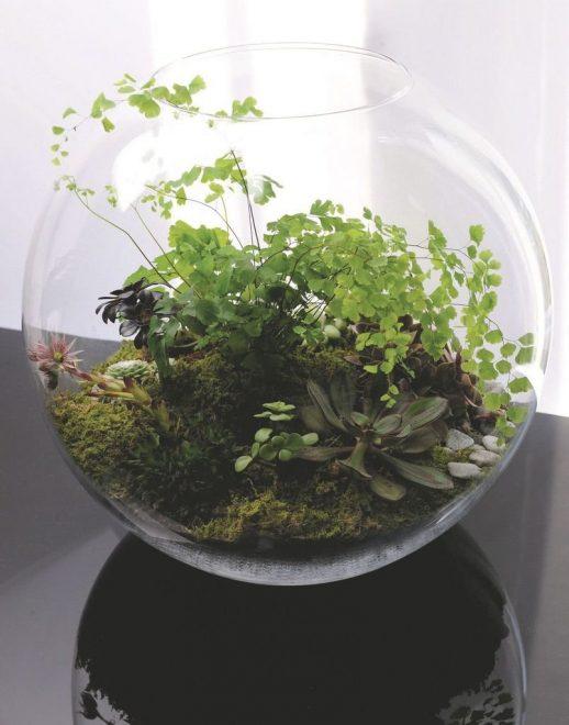 Флорариум из старого аквариума
