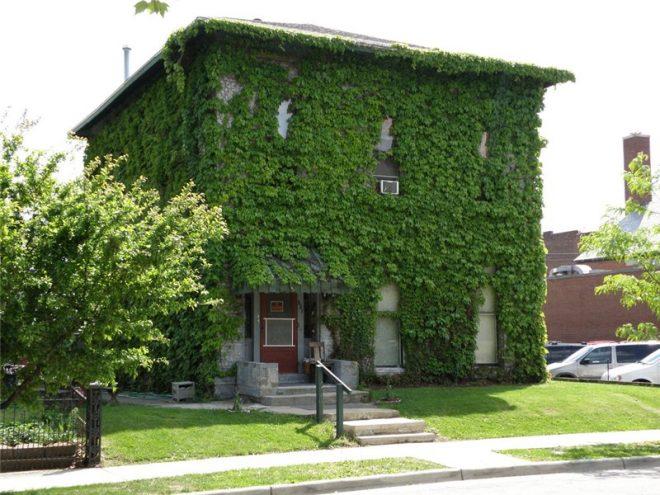 Увитый плющом фасад дома