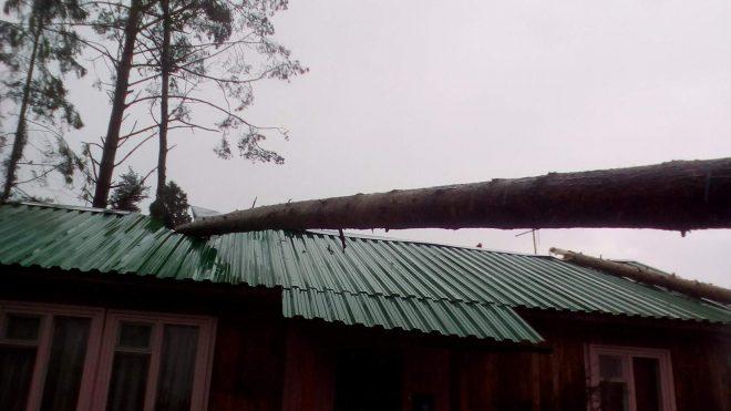 Крыша повреждена упавшими деревьями