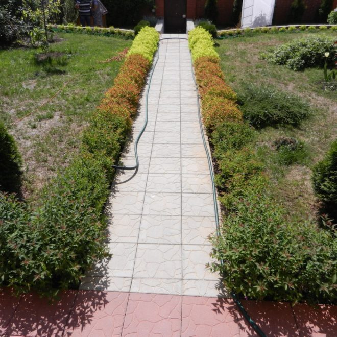 Ограждение дорожек в саду с помощью кустарников