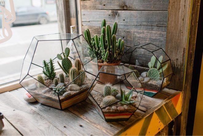 лучшие растения для мини террариума