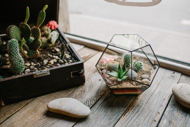 кактусы в мини-террариуме
