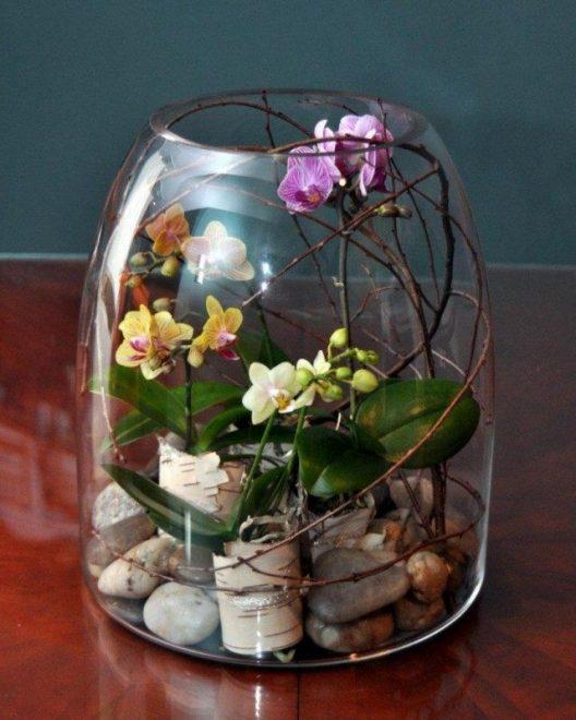 орхидея во флорариуме