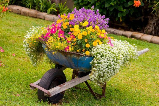 Как красиво украсить двор цветами