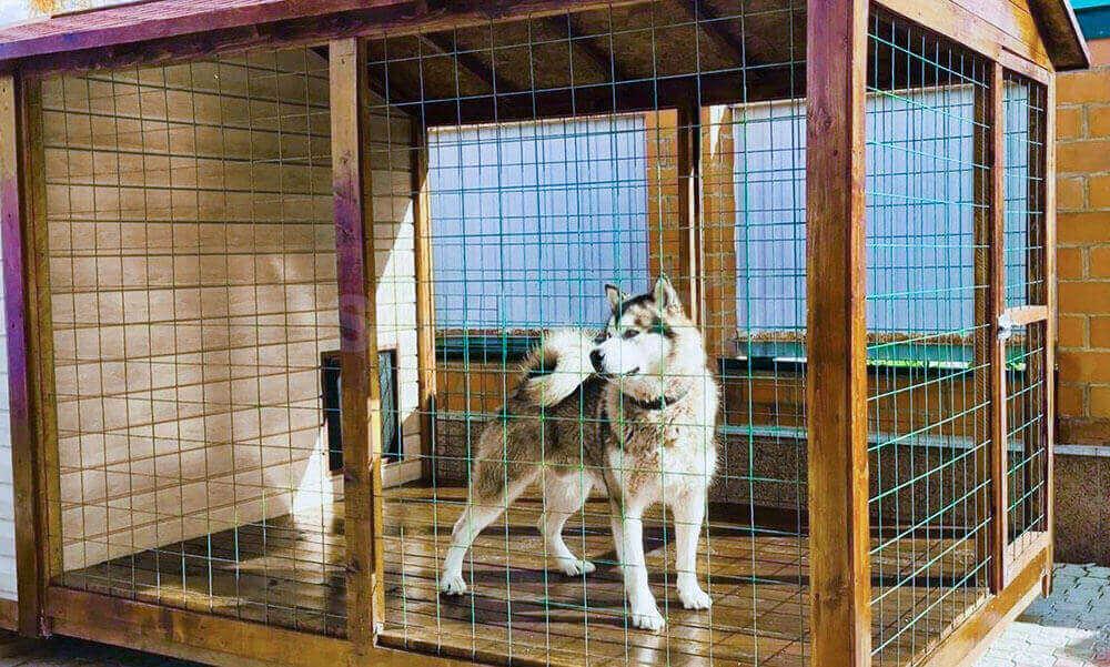 Как самому сделать вольер для собаки